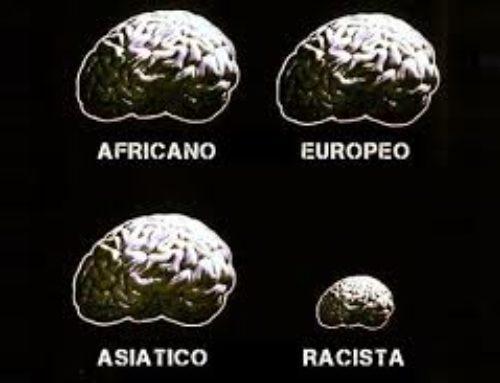 Tipos de cerebro
